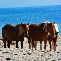 Rare | Wild Horses
